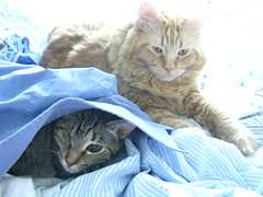 Jasper and Maggie cuddling