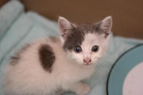 Newly rescued kitten