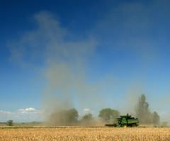 field gold golden wheat harvest combine northdakota agriculture harvester johndeere thresher threshing wheatfield 575 combining canon30d 9770 snoshuu lensefs1785mmf45f56isusm
