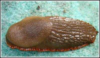 slug copy