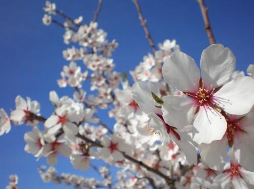 Primavera en la Huerta 01