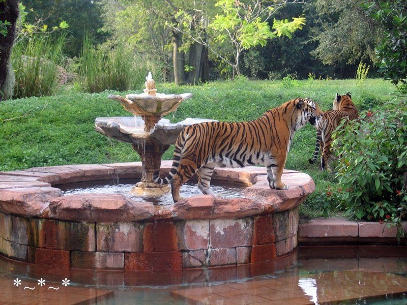 IMG_7082-DAK-two-tigers-fountain