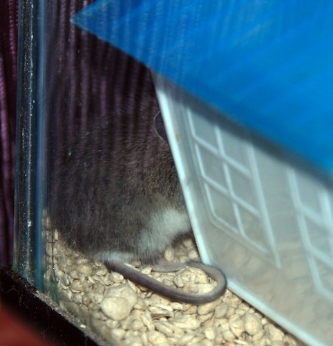 Pip in Hiding