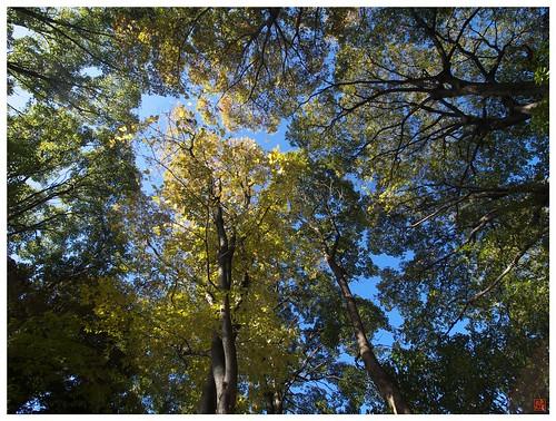 Under the blue sky 081210 #01
