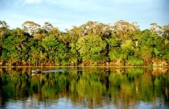 Anglų lietuvių žodynas. Žodis amazonia reiškia <li>Amazonia</li> lietuviškai.