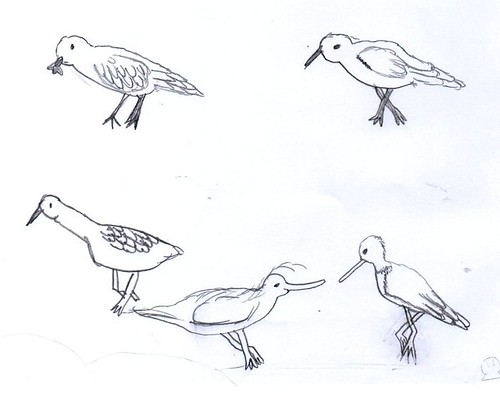 sketches of birds. irds sketches