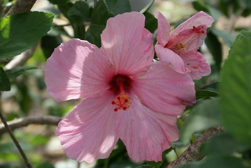 Flowers 12-18-08