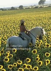 lz000024 (Lothar Lenz) Tags: horse caballo cheval pre andalusien cavalo pferd hest equus paard hst hengst hestur andalusier konj hobu zirgs haciendabuenasuerte magdadysli fotolotharlenz