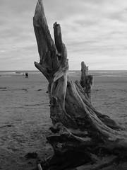 Alnmouth Beach (FunnyLilGreekGirl) Tags: beach alnmouth