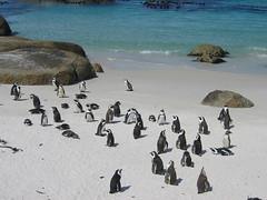 IMG_0014 (zorin_13) Tags: 2005 review sdafrika kapstadt