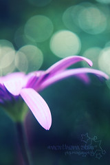 hbw. (*northern star°) Tags: flower macro verde green nature canon wednesday garden petals purple bokeh natura explore fiore viola petali northernstar mercoledì explored donotsteal eos450d ©allrightsreserved hbw northernstarandthewhiterabbit northernstar° macrolens4 1855is tititu digitalrebelxsi usewithoutpermissionisillegal northernstar°photography ifyouwannatakeitforpersonalusesnotcommercialusesjustask