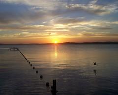 Buoy-set (pominoz) Tags: sunset lake reflection bird silhouette newcastle belmont nsw buoys lakemacquarie buoyant