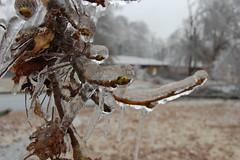 Ice close up (laurienrick) Tags: ice nature icestorm damage arkansas naturaldisaster springdale january2009 icestorm2009
