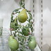 pear image, photo or clip art