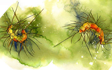 House Centipede – PHYLO: THE TRADING CARD GAME