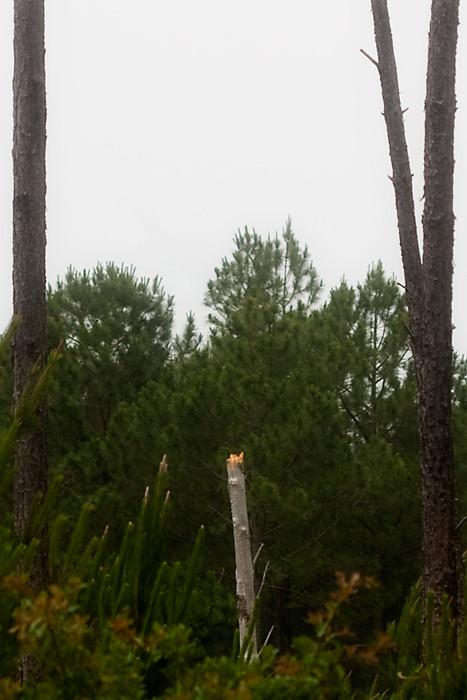 My Day 13/31:  Lone Pine Breaks