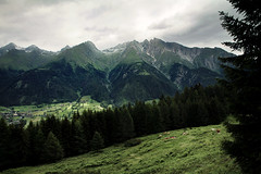virgen valley (Youronas) Tags: wood mountains alps forest landscape tirol cows meadow wiesen berge valley alpini alpen landschaft wald virgen tyrol tal khe osttirol hohetauern tauern virgental easttyrol uppertauern virgenvalley