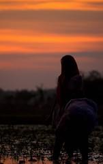 Women (Omar Aziz) Tags: india water landscape farmers farming farmer afterrain gorakhpur transplantation omaraziz maharajganj