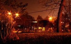 dandelion after dark (Carlin Joe) Tags: night dandelion alphabetgame utata:project=nocturnal2
