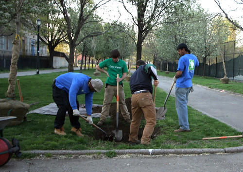 Tree Planting near Automotive High