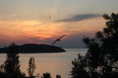 Heybeliada'da Gnbatm (Coolwater10) Tags: sunset cloud sun seagull istanbul gunes siluet heybeliada marti bulut gnbatm gne mart gunbatimi kasikadasi kakadas flickrlovers