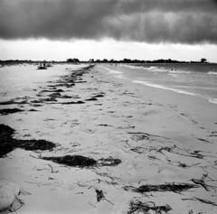 Ft DeSoto (porkfork6) Tags: trees beach fuji palm 400 diafine neopan ftdesoto