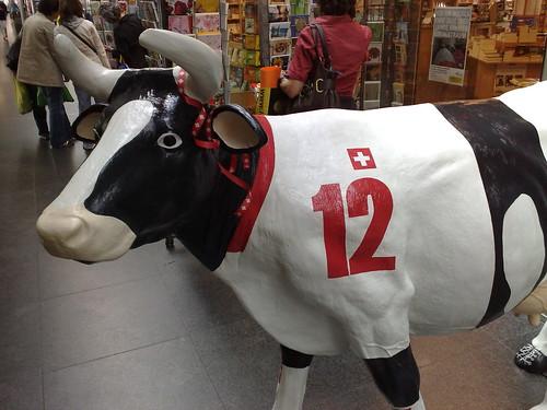 被淘汰的瑞士牛