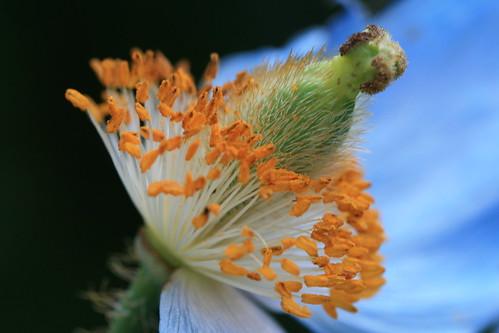 My Petals..Oh!!