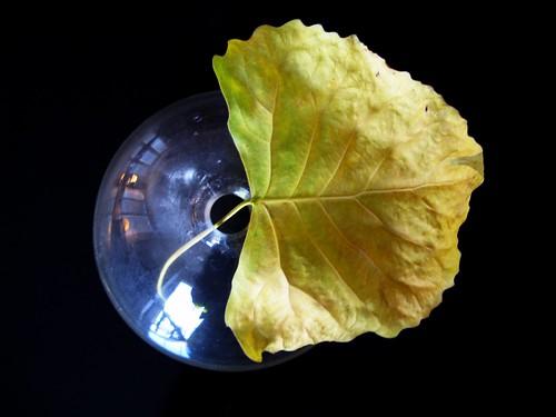 Leaf 007