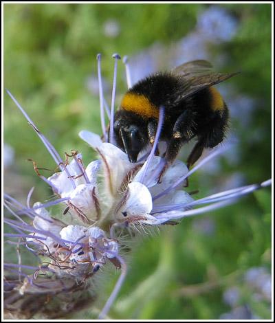Bee4 copy