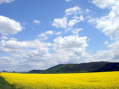 slovakia yellow 1 (kexi) Tags: blue wallpaper sky panorama mountains field yellow clouds wow spring nikon view may hills coolpix slovensko slovakia 2008 easterneurope vast instantfave mywinners abigfave impressedbeauty