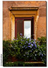 ROMA: EN PIAZZA NAVONA (Miguel Calleja) Tags: plaza rome roma window ventana piazza piazzanavona 24105l plazanavona eos40d