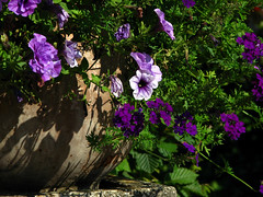 Sharp shadows (aGinger) Tags: holiday castle garden hungary shadows lilac petunia 2008 verbena szchenyi nyarals nagycenk kastly