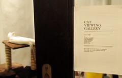 Cake the Cat, BooksActually