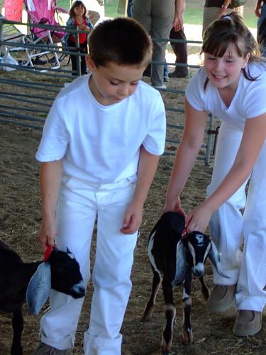 4-H Goat Judging