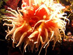 Monterey Bay aquarium (Where is Philip?) Tags: california usa monterey montereyaquarium
