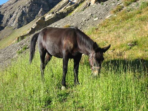 La mule!