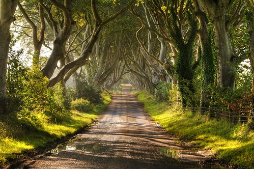 The Dark Hedges Northern Ireland / Christopher Tait