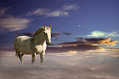 Heavanly Horse (DDA / Deljen Digital Art) Tags: horse cloud mist fog photoshop heaven floating created creation blended imagination layers whitehorse imaginative blend stalion imaginatory