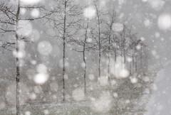 It's snowing again