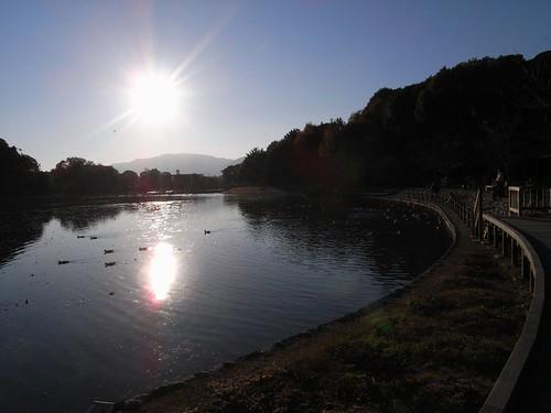 橿原神宮(2008大絵馬)-11