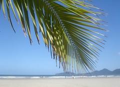 Tropical beach. (rps.net) Tags: brazil beach sunshine brasil leaf wind sãopaulo santos tropical coconuttree atlanticocean interestingness245