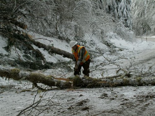 Clearing trees in the Coast Range on Dec. 24, 2008