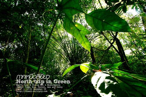 Thailand Forest