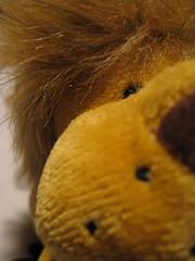 Segundo PLano (Jos Ramn de Lothlrien) Tags: hair toy lion jr amarillo leon gift mueco juguete peluche melena leoncito producciones pelitos reydelaselva kingof greitas
