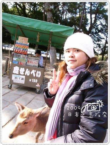 奈良的鹿 (3)