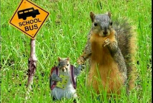 Squirrel School bus.jpg