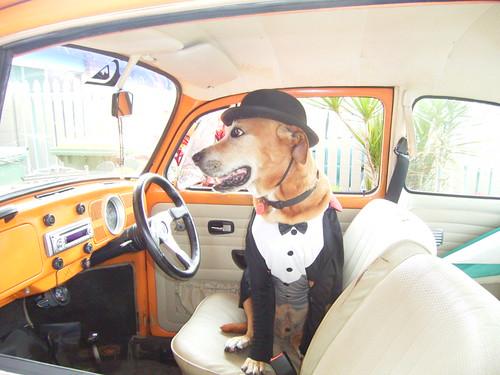 Chauffeur Rocky