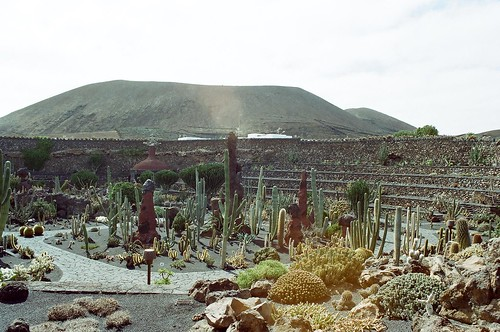 El Jardin de Cactus visto desde el molino