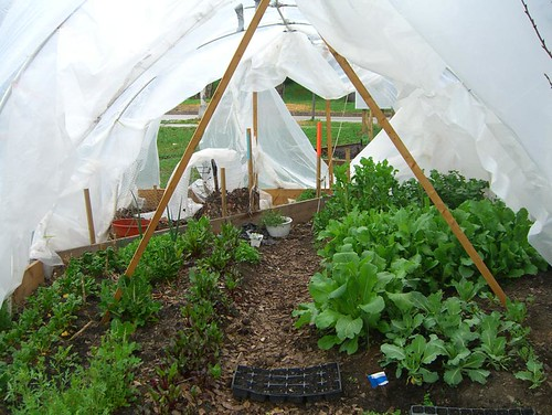 10 03 26 Tinges Commons - Hoop House Plants 01.jpg